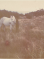 When the Horses Ran Free